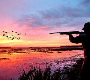Picture of Best Duck Hunting Location