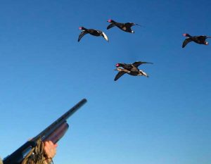 Picture of Man Aiming At Ducks in Sky